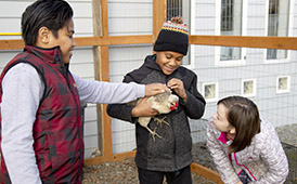 Williwaw Elementary Students Jimmy Tali-Utai, Jurrell crook, and kay-Lynn Virden work in the coop
