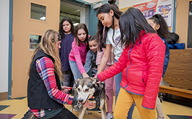 Ptarmigan Elementary School students pet one of Kristy Berington's dogs at the IditaRead™ assembly