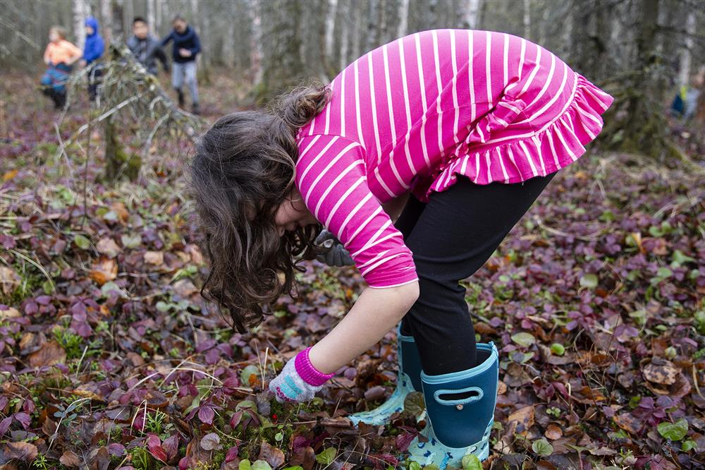 A student gathers berries for identification while on a nature walk in Cheryl Silcox's second-grade class.