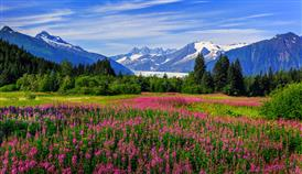 Picture of mountain scene with fireweed in valley.