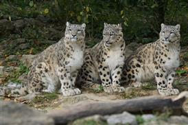 Snow Leopards take PRIDE in our community